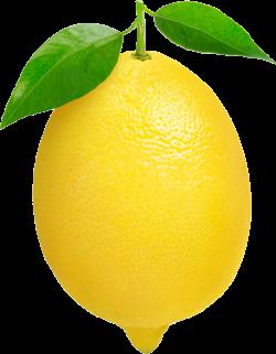 Lemon Thirteen | Isolated Stock Photo by noBACKS.com