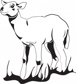 Simple Lamb Drawing at GetDrawings.com | Free for personal use ...