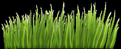 Safari grass clipart | 設計 | Pinterest | Grasses, Clip art free and ...