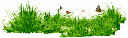 Grass Patch With Insects PNG - PHOTOS PNG