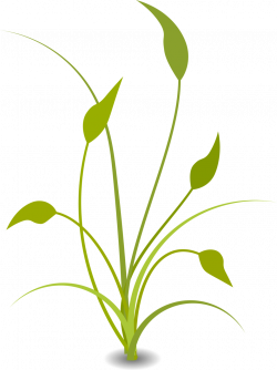 Green Plant | Free Stock Photo | Illustration of a green plant | # 16631