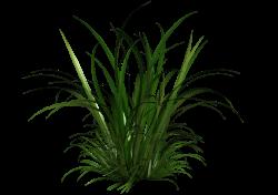 tall grass clipart - Google Search | Tall Grass | Pinterest
