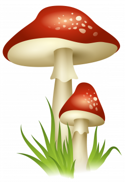 Mushrooms Transparent PNG Picture | Gallery Yopriceville - High ...