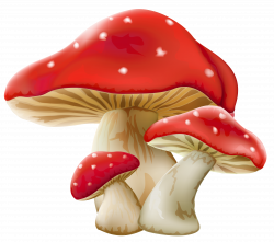 Mushrooms PNG Picture | Gallery Yopriceville - High-Quality Images ...