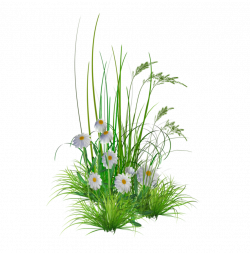 png_garden_flowers__by_kmygest-d5f8goi | ✿° my garden valley ...