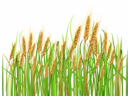 Barley prices closed higher by 1.82 per cent on Monday at the ...
