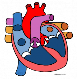 28+ Collection of Human Heart Clipart Free   High quality, free ...
