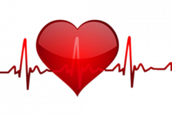 Heart rate Pulse Clip art - Heart beat 1042*702 transprent Png Free ...