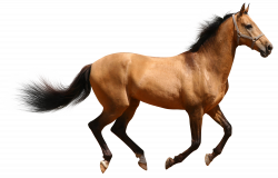 Transparent Brown Horse | Gallery Yopriceville - High-Quality ...