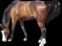 Horse Twenty-six | Isolated Stock Photo by noBACKS.com