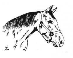 Horse equine clipart by kristen - Clipartix