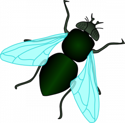 House Fly Clipart - Pencil and in color house fly clipart