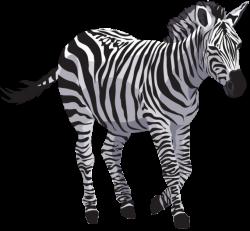 Zebra-PNG by yotoots on DeviantArt