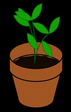 Clipart - Plant, Terracotta