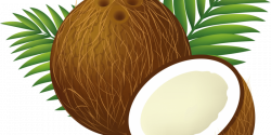 Ask Umbra: Are Coconut Products Bad for the Environment? | Catalyst ...