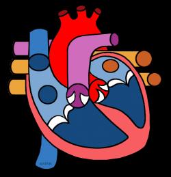 Science Clip Art by Phillip Martin, Human Heart