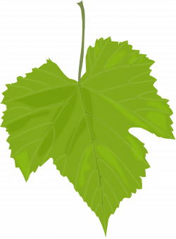 Wine Leaf Clipart