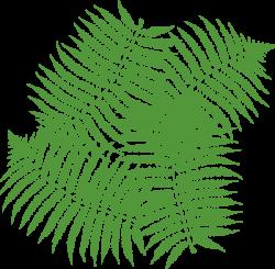 Four Fern Leaves Clip Art at Clker.com - vector clip art online ...