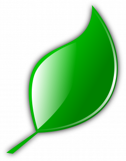 Clipart - Leaf