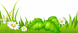 Grass with Daisies Ground PNG Picture   Gallery Yopriceville - High ...