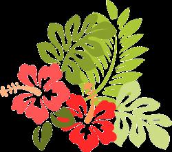 Image gratuite sur Pixabay - Hibiscus, Fleur, Feuilles | Pinterest ...