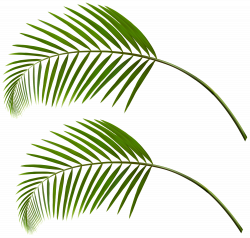 Palm Leaves PNG Clip Art | Gallery Yopriceville - High-Quality ...