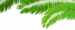 Palm Branches Decoration PNG Clip Art Image | Gallery Yopriceville ...