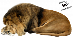 Cut-out stock PNG 13 - sleeping lion by Momotte2stocks on DeviantArt ...