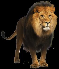 Lion PNG Picture | dzivnieki | Pinterest | Lions and Animal