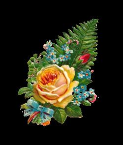 Antique Images: rose clip art | Victorian & vintages scraps - die ...
