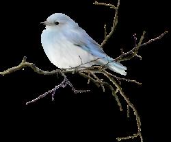 Florju_togetherinwinter_el5.png | Pinterest | Bird, Pastels and ...