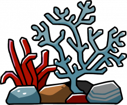 28+ Collection of Coral Reef Clipart Png | High quality, free ...