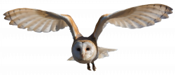 Owls PNG images free download, bird owl PNG