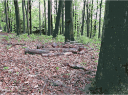 Clipart - Sculpture Park Waldfrieden 1