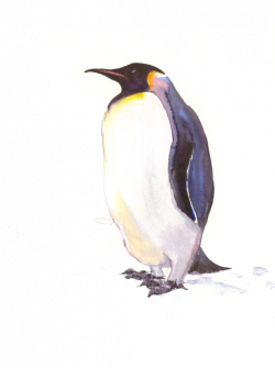 King Penguin Drawing at GetDrawings.com   Free for personal use King ...