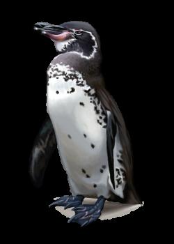 download-Penguins-PNG-transparent-images-transparent-backgrounds ...