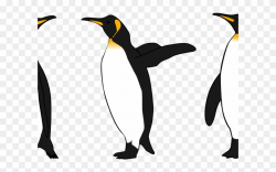 King Penguin Clipart - Png Download (#2701937) - PinClipart