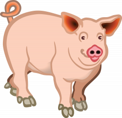 19 Pigs clipart HUGE FREEBIE! Download for PowerPoint presentations ...