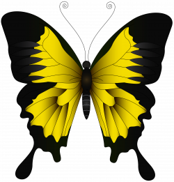 Monarch butterfly Green Yellow - Yellow Butterfly PNG Clip Art Image ...