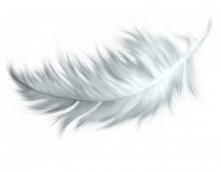 Feather Brown transparent PNG - StickPNG