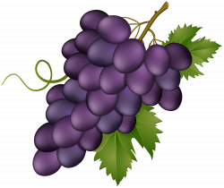 Grape Pink Transparent PNG Clip Art Image | Gallery Yopriceville ...