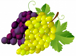 Grapes png images, grapes png photo gallery free download ...