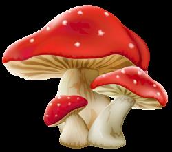 WEB AMB MOLTES IMTAGES GRATIS - Mushrooms PNG Picture | картинки для ...