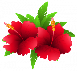 Exotic Flowers and Plant PNG Clipart Image | Festa Havaiana ...