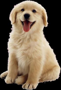 Cute Dog Clipart …   Cute animals   Cute dogs, Dog cat, Dogs ...