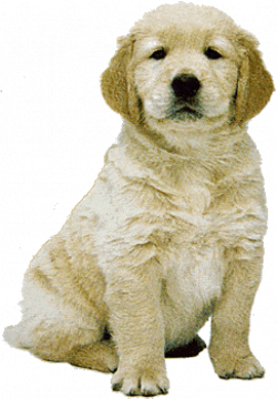 Free Newfoundland Puppy Cliparts, Download Free Clip Art ...