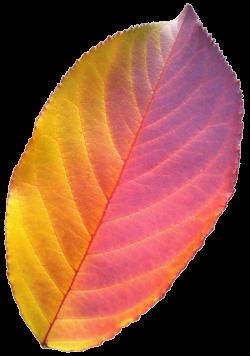 Rainbow Tea Leaf by jeanicebartzen27 on DeviantArt