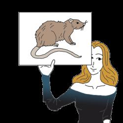 Rat Dream Dictionary: Interpret Now! - Auntyflo.com