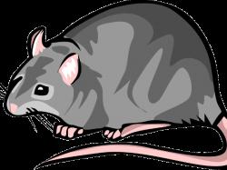 Rat clipart black death ~ Frames ~ Illustrations ~ HD images ~ Photo ...