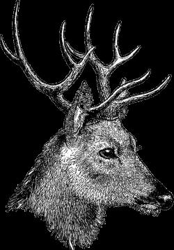 free+vintage+digi+stamp_deer+head.png 1,109×1,600 pixels   Animal ...